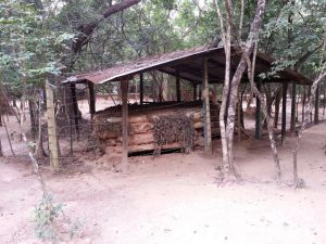 LTTE Bunker In The Vanni Jungle