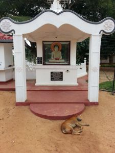 Let Sleeping Dogs Lie; Buddhist Shrine Outside Military Base, NE Sri Lanka