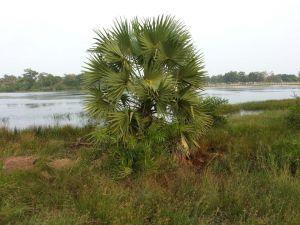 Nandikadal Lagoon